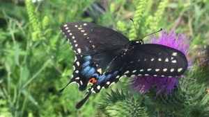 Butterfly Garden Creation and Installation